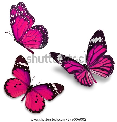 Three pink butterfly, isolated on white background - stock photo