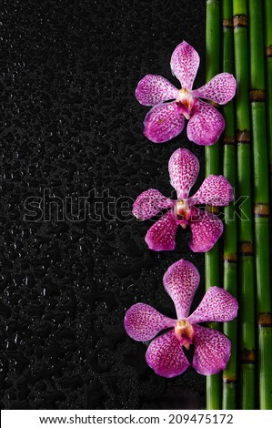 Three Pink orchid with bamboo grove on wet background - stock photo