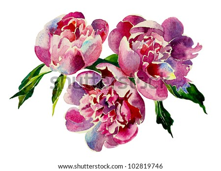 Three pink peonies watercolor - stock photo