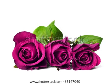 Three pink roses in a pure white background with space for text