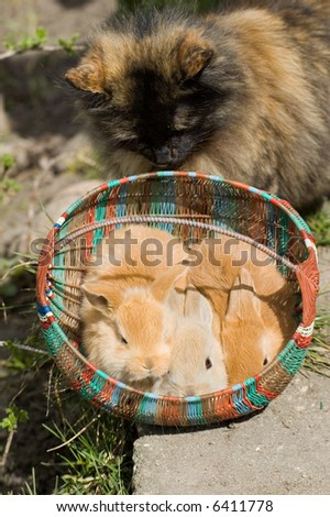 Three rabbit sitting in the punnet nearby the cat - stock photo