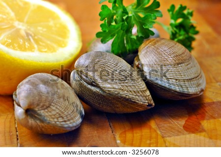 Three raw clams ready for steaming on a kitchen cutting board with lemon and parsley - stock photo