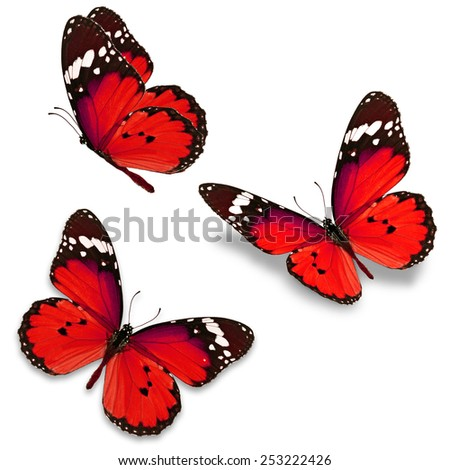 Three red butterfly isolated on white background - stock photo