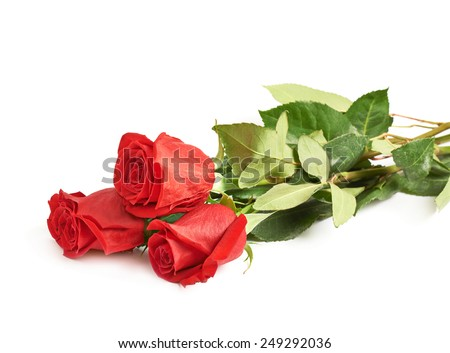 Three red roses isolated over the white surface - stock photo