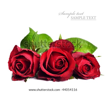 Three red roses on a white background with space for text - stock photo