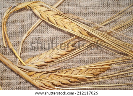 Three ripe wheat spikelets on sacking - stock photo