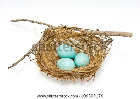 Three robin eggs in their nest - stock photo
