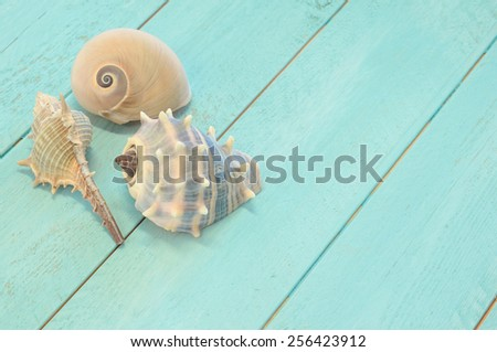 Three sea shells on an aqua wood surface - stock photo