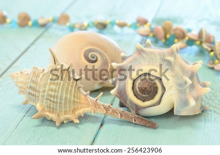 Three sea shells with soft focus on a surface of weathered planks painted aqua - stock photo