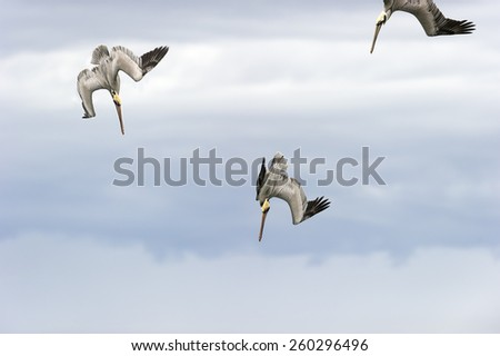 Three seabirds are diving against a cloudy sky. - stock photo