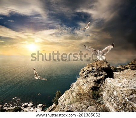 Three seagulls over the sea and mountains at sunset - stock photo