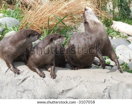 Three seals - stock photo
