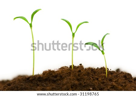 Three seedlings illustrating the concept of new life