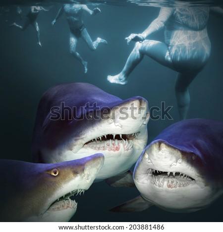 Three sharks have a fun.  - stock photo