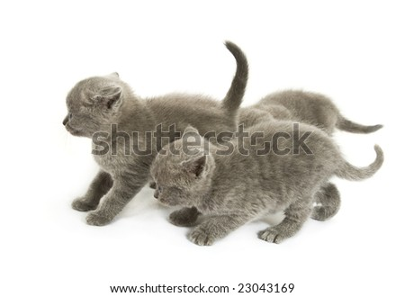 Three small funny kittens. Isolated on white background - stock photo