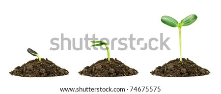 three small plant isolated on white - stock photo