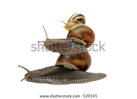 Three snails balancing one top of another. Photo is not a montage; I had a lot of fun :)