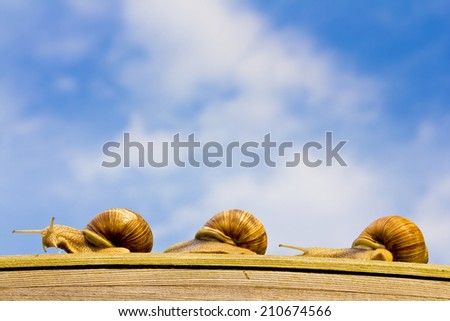 Three snails on the trip - stock photo