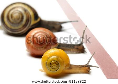 Three snails racing towards red finish line - stock photo