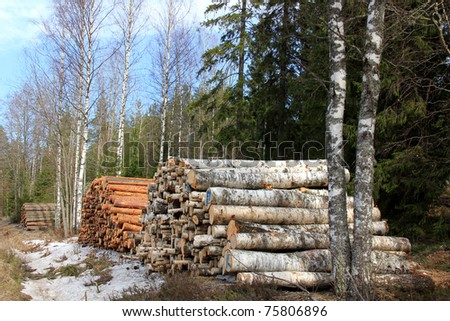 Three Stacks of Wooden Logs in Forest: Spruce, Pine and Birch