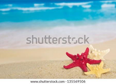 Three starfishes on the beautiful sea coast - stock photo