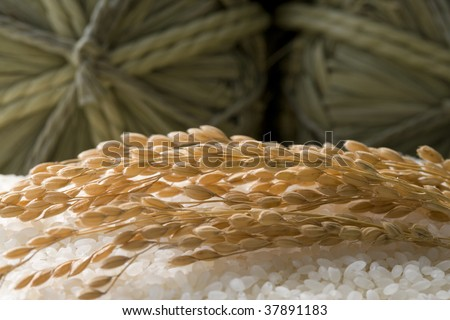 Three straw rice bags are place on a lot of fresh rice.