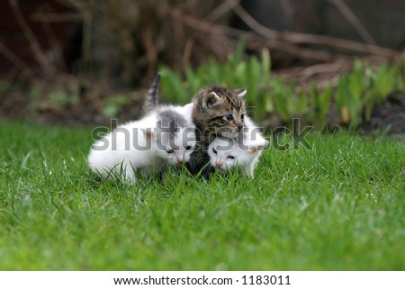 Three tiny kittens out for the first time in the big world - stock photo