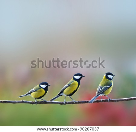 three titmouse birds - stock photo