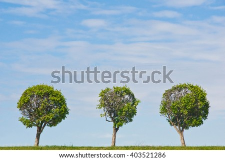 three trees against the sky at summer day