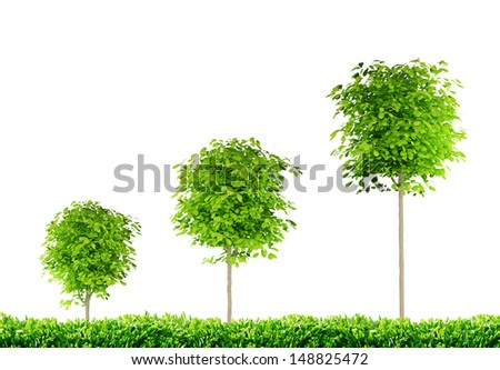 three trees, three rounded trees with white background - stock photo