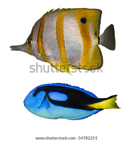 Three Tropical fishes on a white background