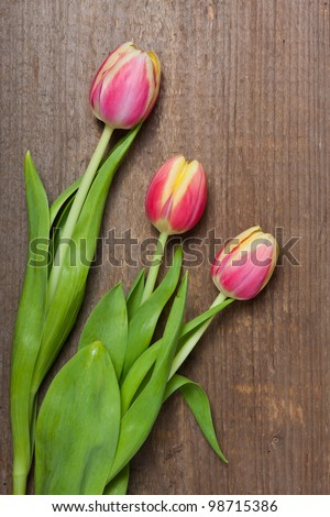 Three tulips laying on a wooden plank.