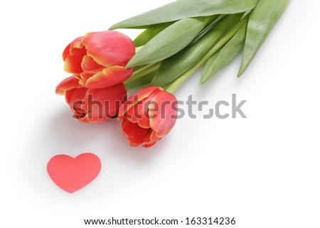 three tulips with paper heart, white background