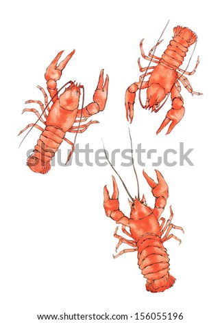 Three watercolor craw fish on white background - stock photo