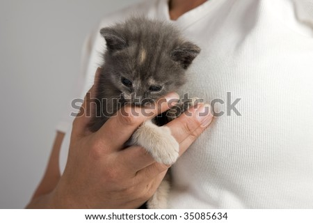 Three weeks old playful kitten in safe hands - stock photo