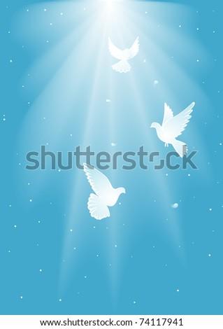 Three  white dove - stock photo