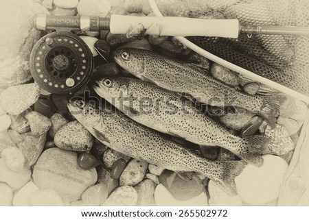 Three wild trout with fishing fly reel, landing net and assorted flies on wet river bed stones with vintage concept.  - stock photo