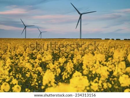 Three Wind Turbines at Yellow Rapeseed Field in Burton Latimer, United Kingdom - stock photo