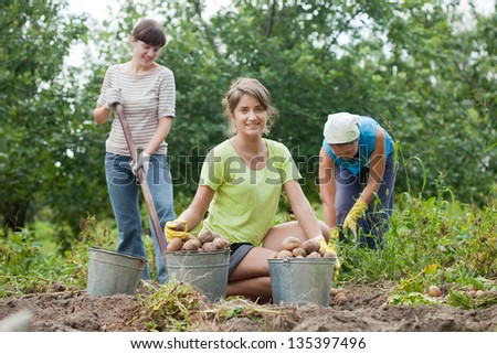 three women harvested potatoes in field