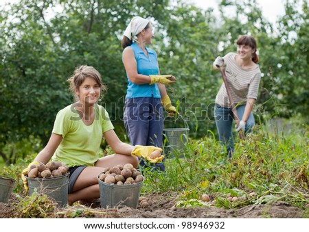 three women harvesting potatoes in field
