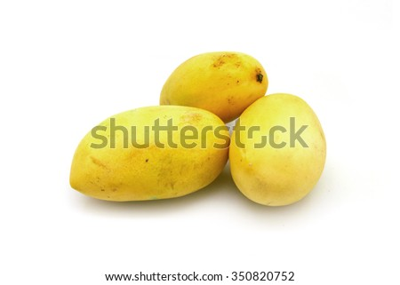 three yellow mangoes on white background