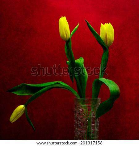 Three yellow tulips in a vase against the background of red color. Play of yellow, green and red colors. Textured photography. Square format. Cheerful and positive composition of spring flowers. - stock photo