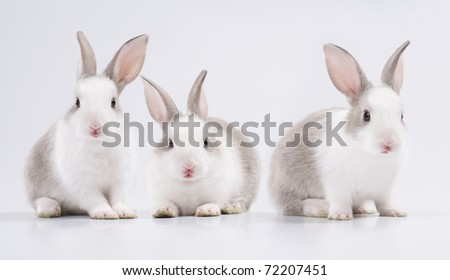 three young rabbit looking at the camera - stock photo