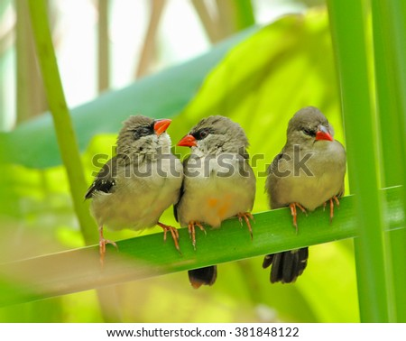 Three younger Birds