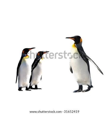 ThreeKing Penguins isolated on white background - stock photo