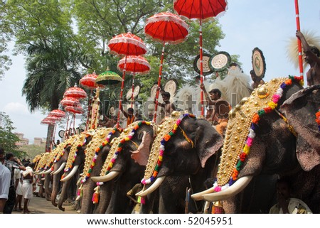 THRISSUR, INDIA - APRIL 24 : Gold caparisoned elephants in Pooram Festival April 24, 2010 in Thrissur, Kerala, India.