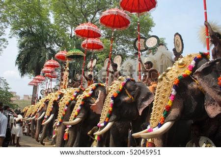 THRISSUR, INDIA - APRIL 24 : Gold caparisoned elephants in Pooram Festival April 24, 2010 in Thrissur, Kerala, India. - stock photo