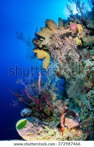 Thriving colorful corals on a tropical reef wall - stock photo