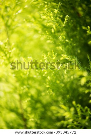 Thuja green tree leaf background - stock photo