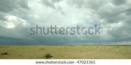 Thunder clouds over Kenya's savanna - stock photo